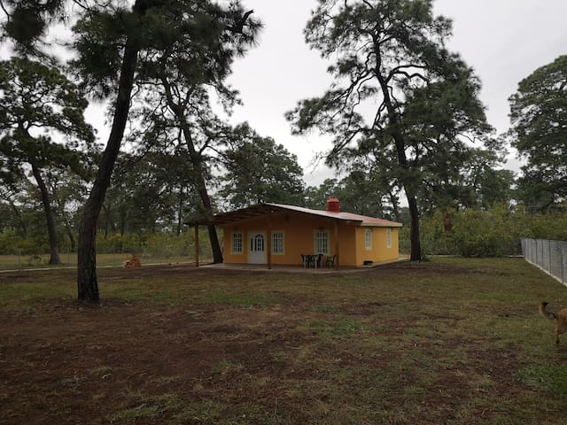 cabaña nueva en medio del bosque a 50  km de gdl