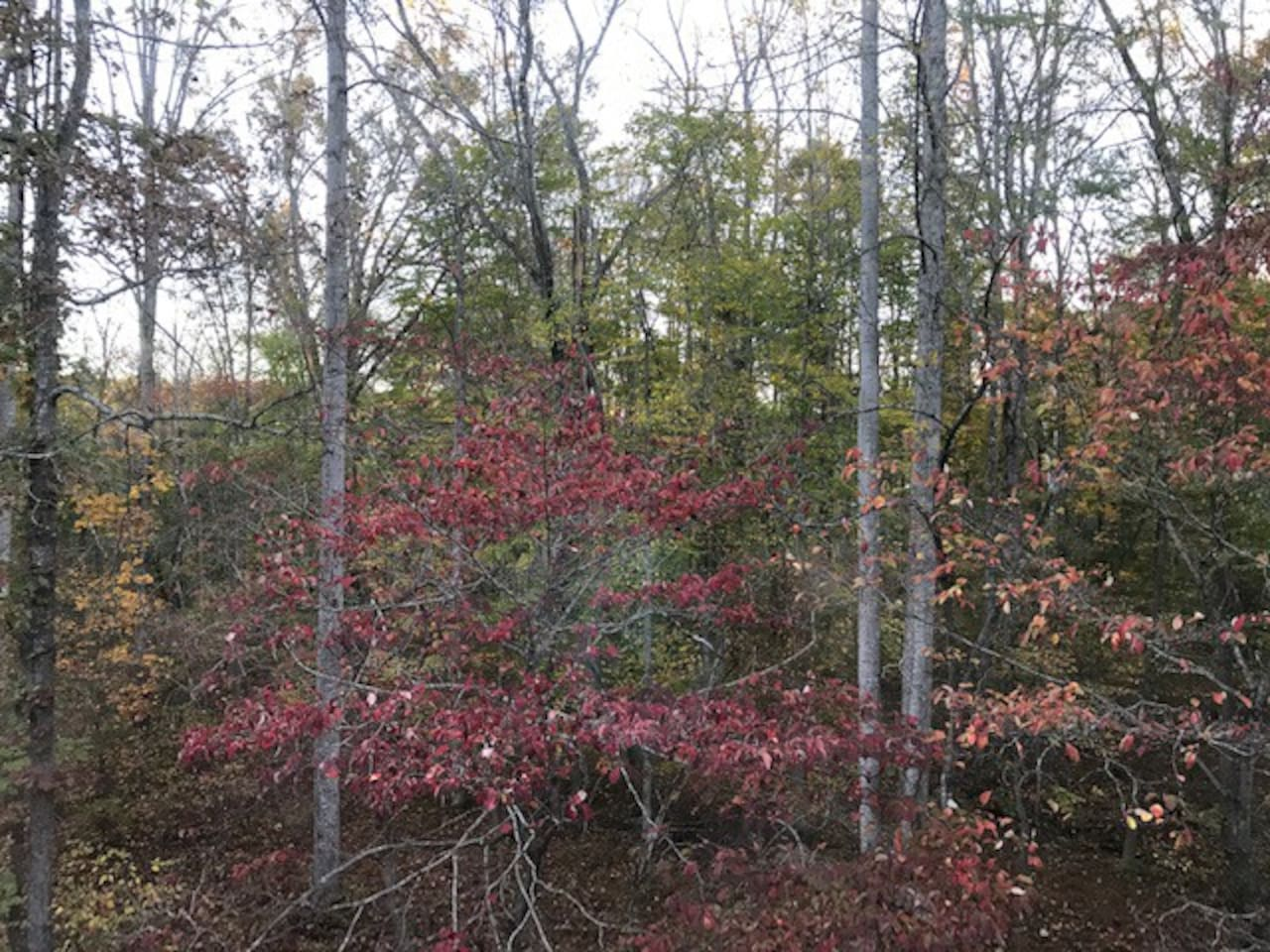 fall colors from side deck