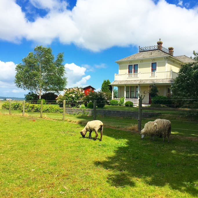 Sheep on a summer day