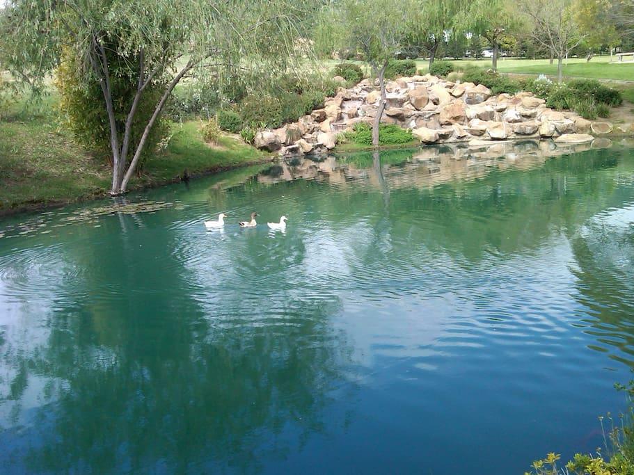 View from Lake gazebo
