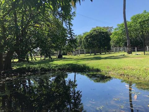 Hacienda Bufalera Las Tapias