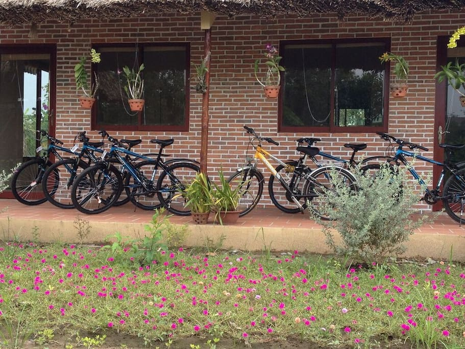 Mountain bikes for our guests