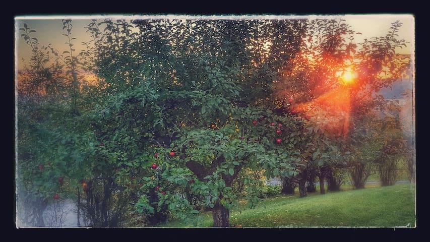 Lys og hyggelig hel Leilighet på Hamar-vest - Hamar
