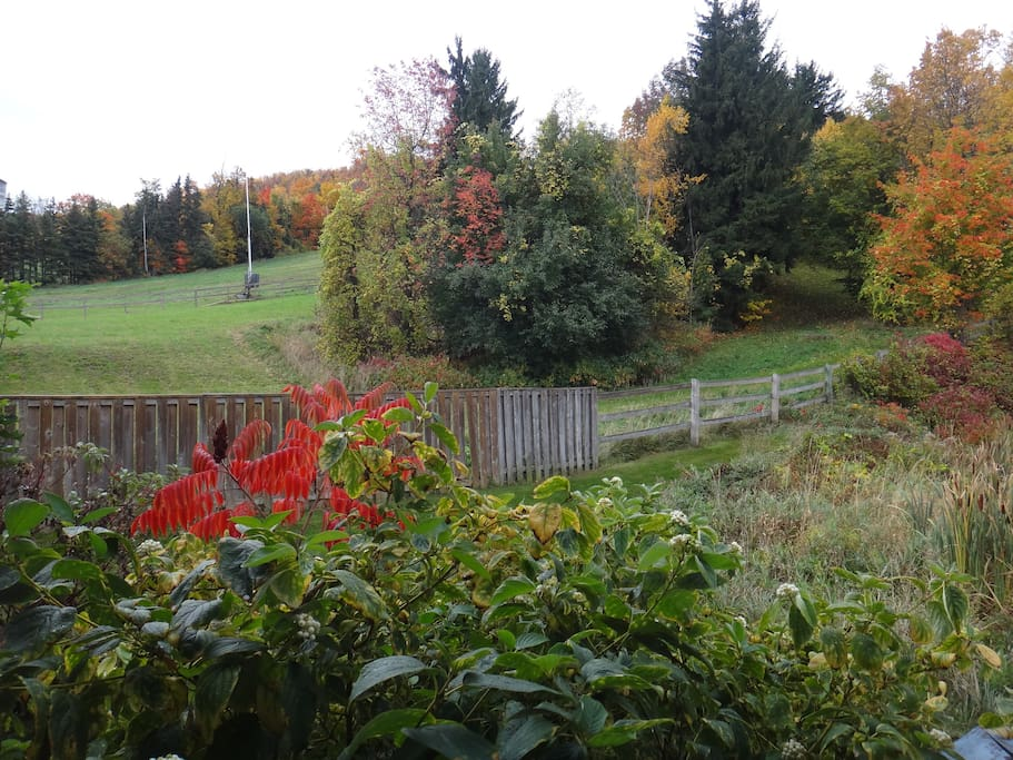 Fall colours from your private patio.