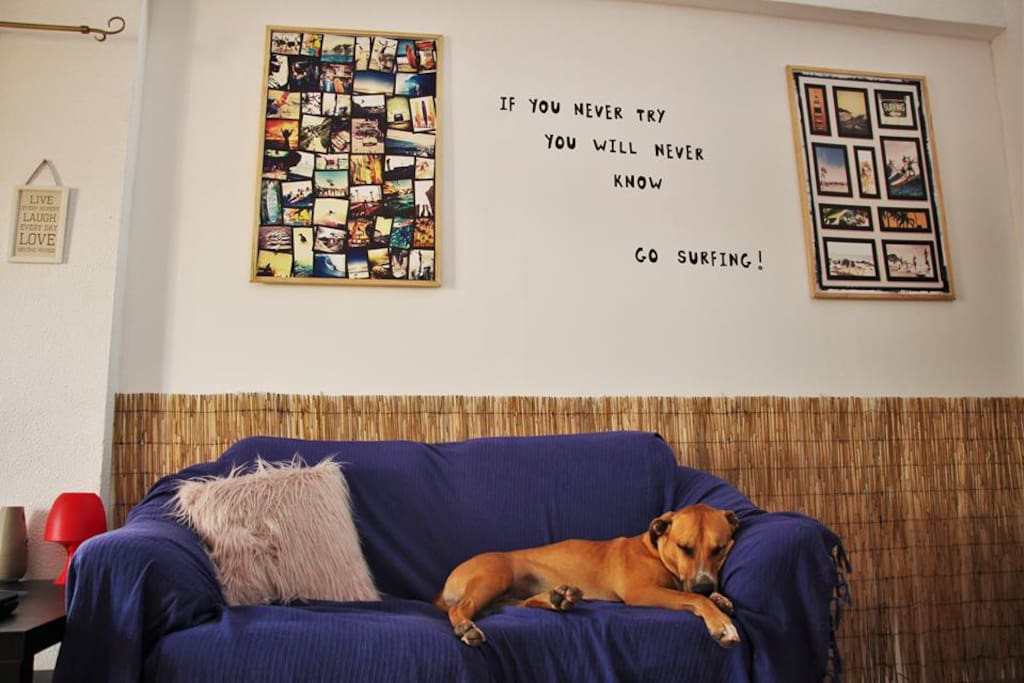 Living room,Richie our dog is chillin after hot day :)