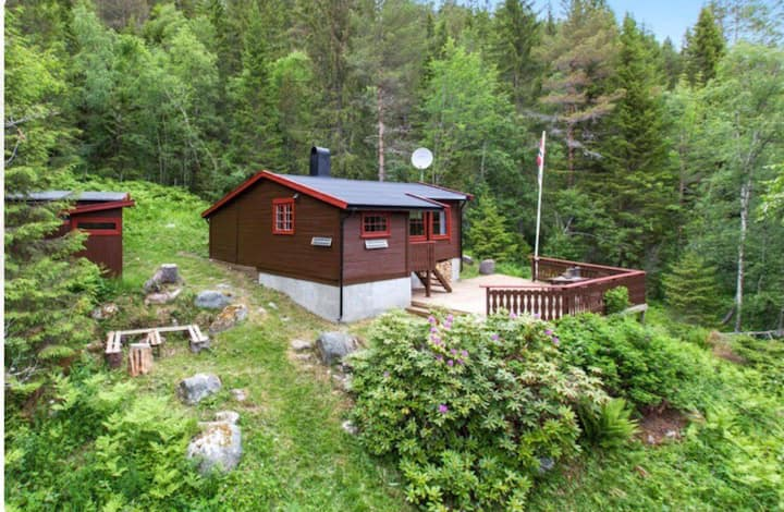 Cosy Norwegian Cabin in the forest