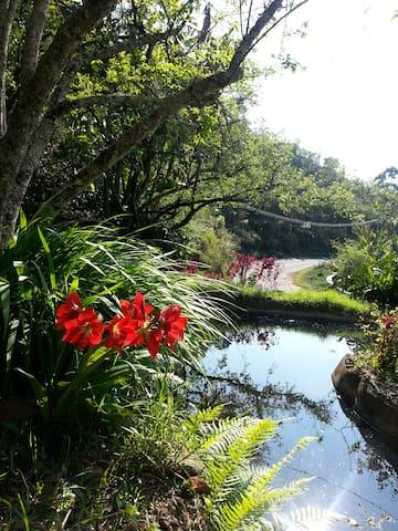 A small pond amidst flora in Swaashramam