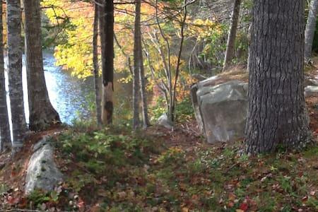 Robertson Lake Cottage-Lady's Slipper
