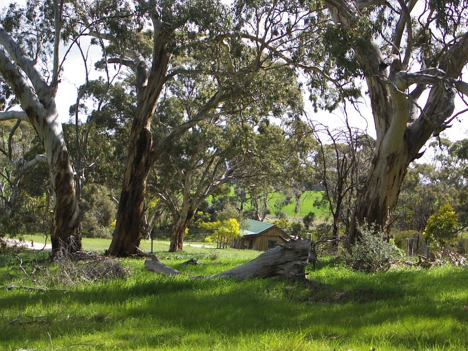 Peace and Seclusion ~ Cathy's Cottage is nestled amidst trees and vineyards on 80acres.