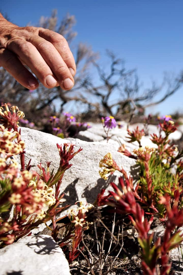 Learn about the Cape Floral Kingdom