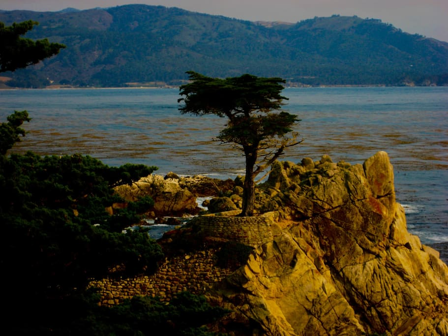 Hop, skip and a jump away from the house is 17-Mile Drive. Enjoy!
