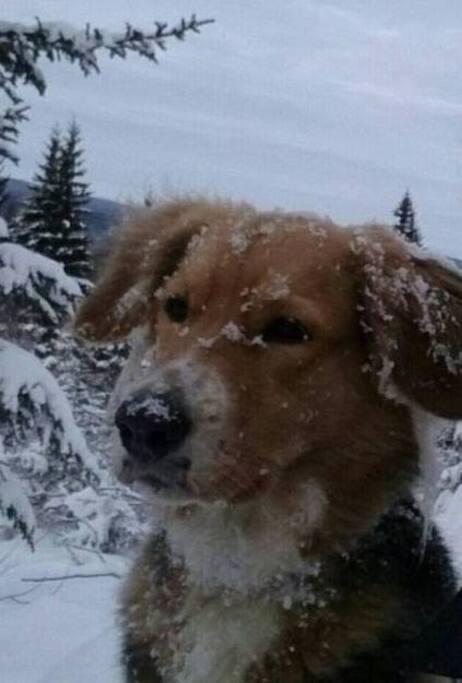 Notre chienne Gwada une bonne gardienne qui adore la neige  ❄ ⛄