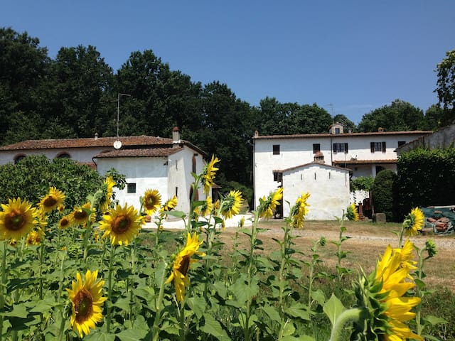 "Vacation home in Tuscany ""Padula"" - calcinaia - Leilighet"