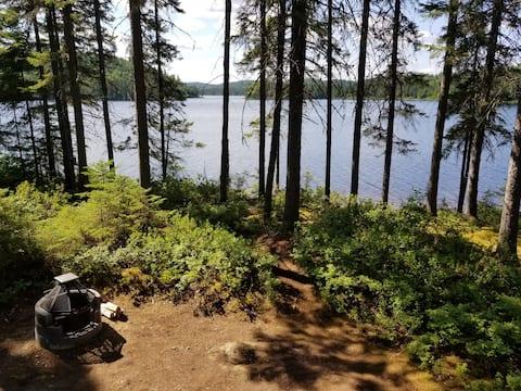 Lodge perché dans les arbres en forêt (Vega #6)