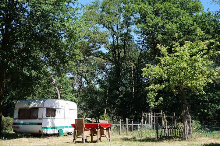 Cozy retro caravan surrounded by beautiful Nature