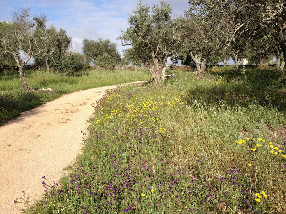 caminho / pathway to the house