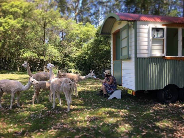 Shepherds Hut Farmstay: glamping on alpaca farm - Laguna