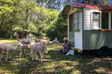 Shepherds Hut Farmstay: glamping on alpaca farm - Laguna - กระท่อม