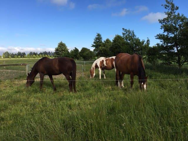 Meet the herd Babe, Riley and Koora.
