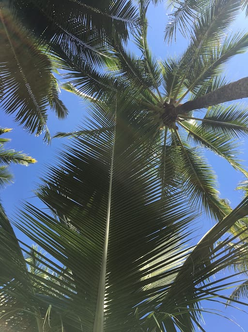 Palms in the back garden