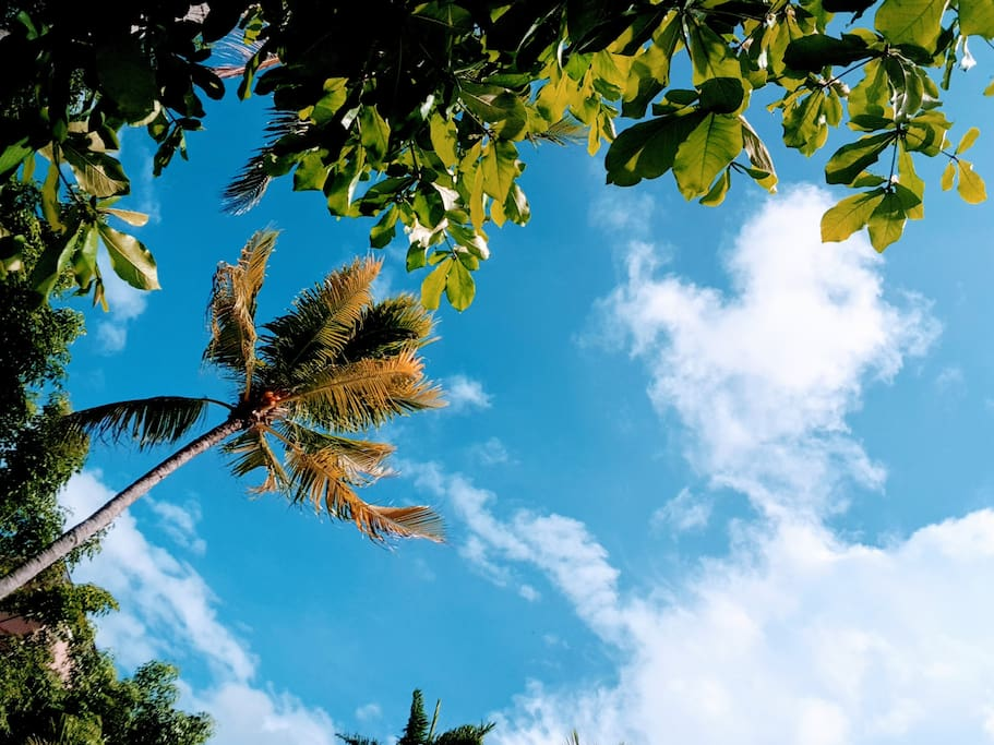 Sky View from Hammock in our Palm garden!