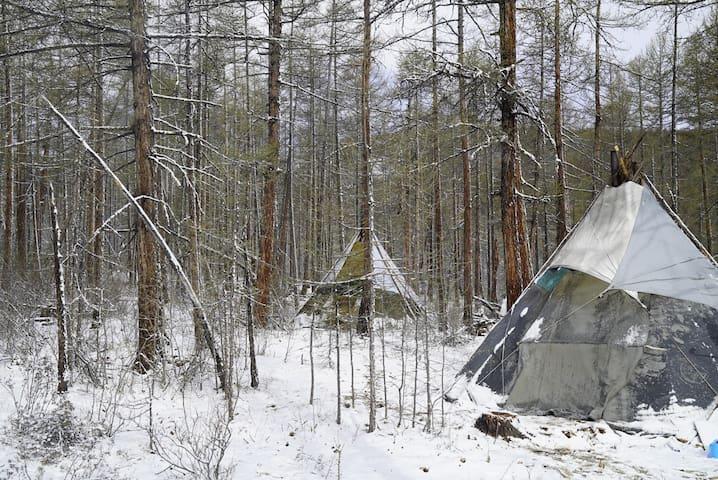 Experience nomadic life in Reindeer family teepee