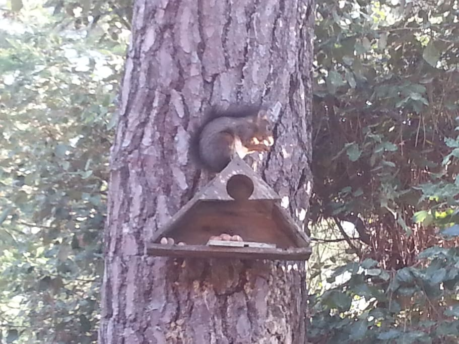 Tic Tac l'écureuil