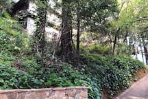 Our home, taken from the bottom of the Dipsea Steps.