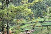 Phub Dem Village Home Stay, nestled in between the green farms surrounded by the lush green forest