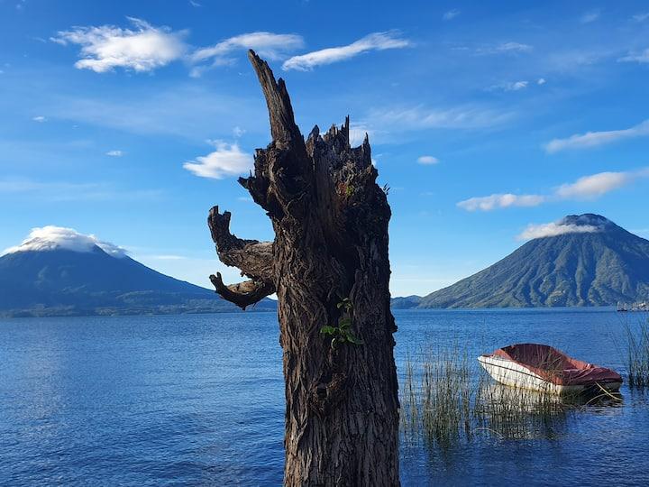 Sacred Tree Atitlán (Terra)