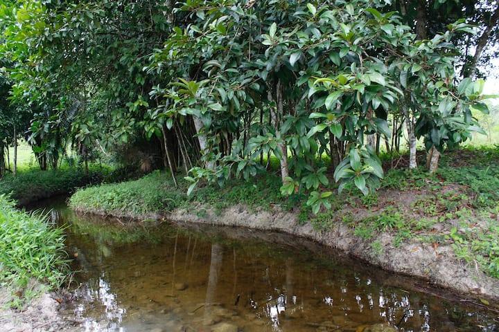Mango Acre. Near tours.Serene jungle.Hike. Bus