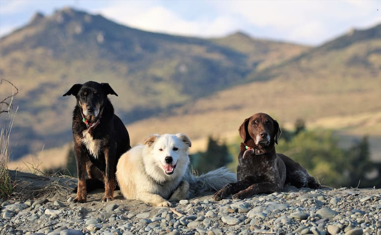 Purple Haze welcome committee - Tash, Spy and Haze. They are very friendly dogs.