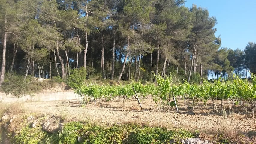 Rustic house between vineyards 35 min to Barcelona - Sant Sadurní d'Anoia - 단독주택