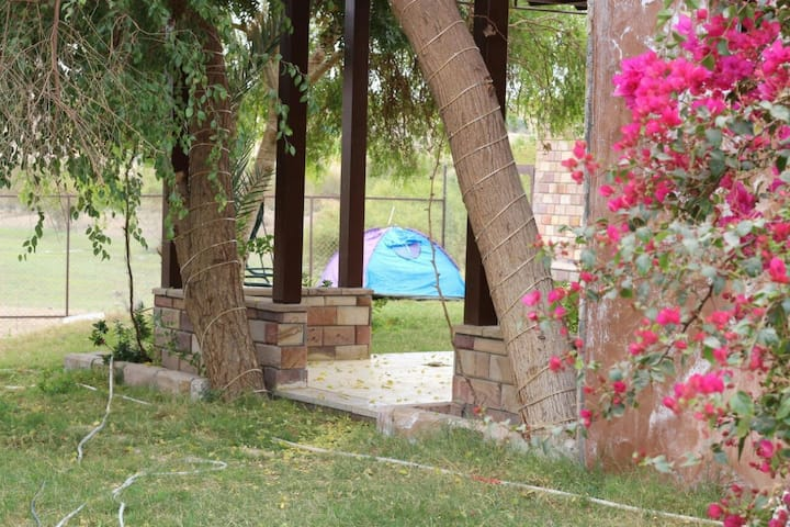Shisha Farm Camp