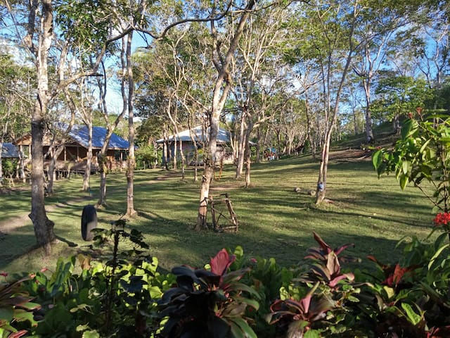 Molave Forest Bed and Breakfast at Chocolate Hills