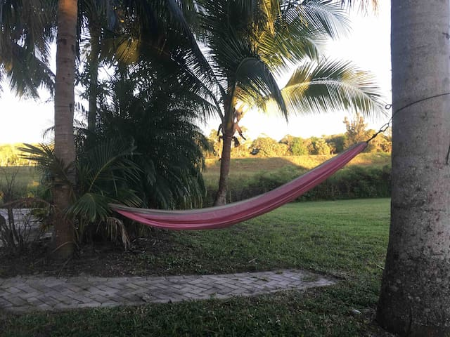 How about a nap beside the baby coconut tree in the hammock?
