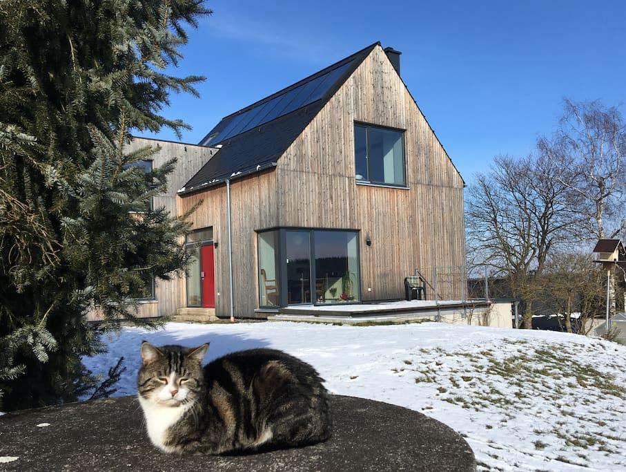 Katze mit Haus