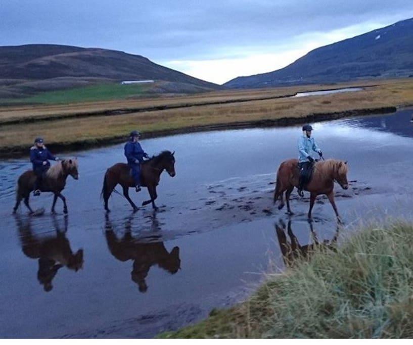 Horse rental on the farm.