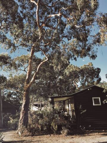 Your very own home among the gum trees