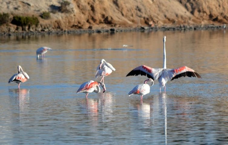 Flamingos in the natural park of San Pedro del Pinatar