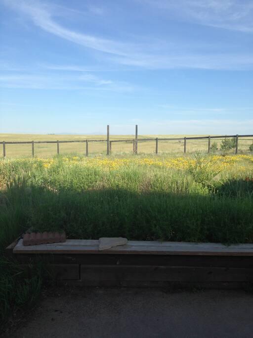 Fenced-in back yard