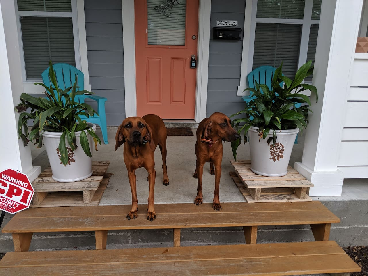 Welcome to our home! These are our pups Daisy and Penny! They stay downstairs at all times and are super friendly when ever you're coming or going