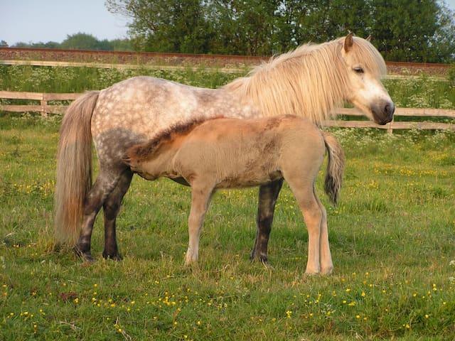 Ferien auf dem Islandpferdehof Kranichtal