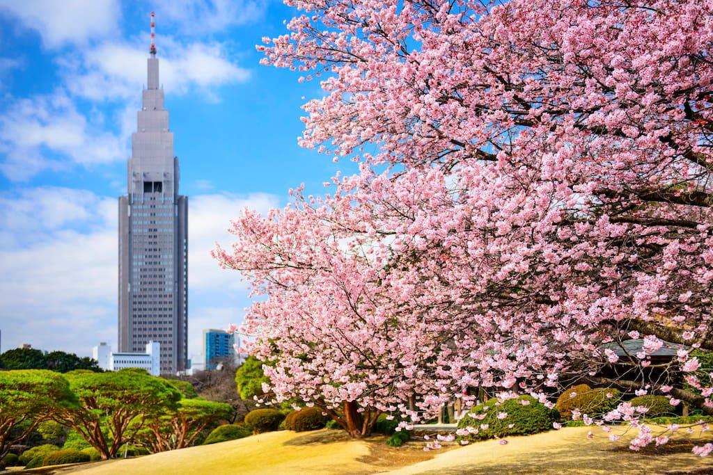Shinjuku Gyoen National Garden within walking distance!