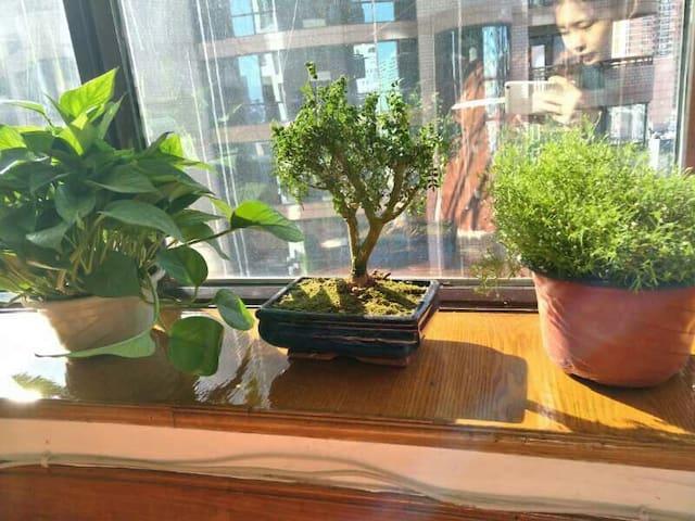 女主人与植物