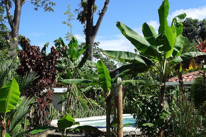 Casas los tucanes,Tucan house