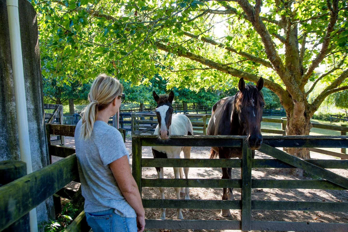 You will have a wonderful stay at this home.. welcoming, social experience on one outstanding property, with lots of variety of animals. A real experience awaits you.