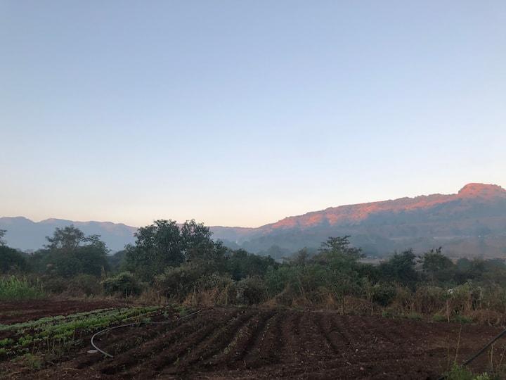 Bhuvi Farms