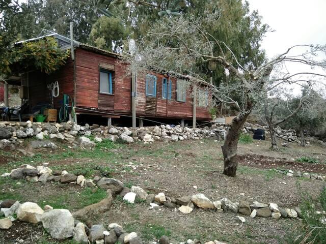 Northen cabin