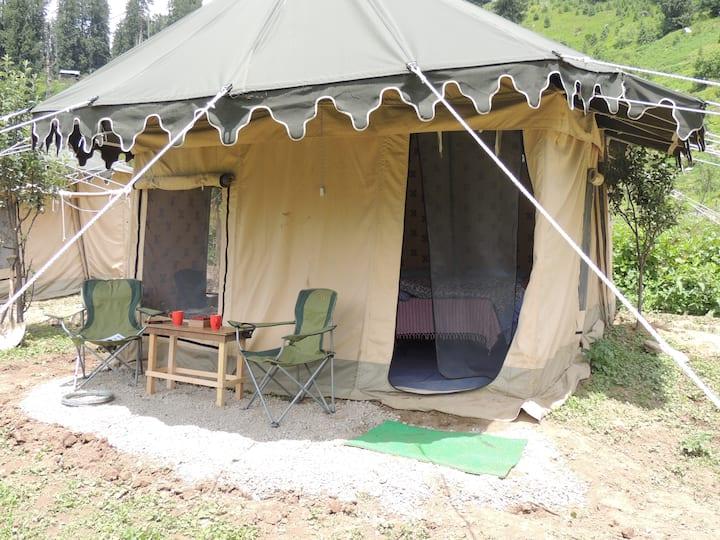 Camp Deodhar 2 :The Malayan Porcupine